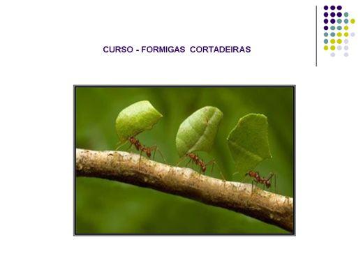 Curso Online de Formigas Cortadeiras