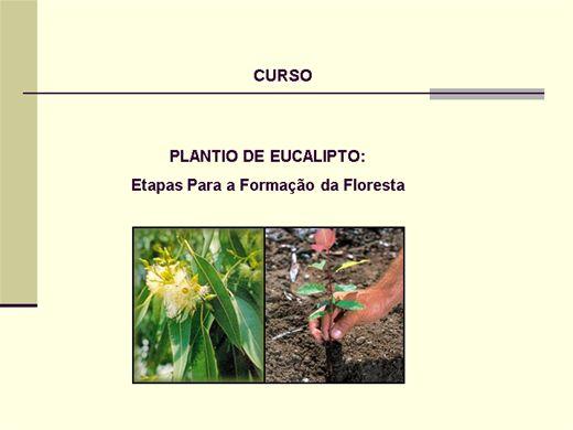 Curso Online de Cultivo do Eucalipto: Etapas para a formação da floresta