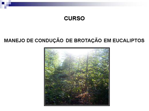 Curso Online de MANEJO DE CONDUÇÃO DE BROTAÇÃO EM EUCALIPTOS