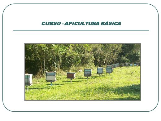 Curso Online de Curso de Apicultura Básica