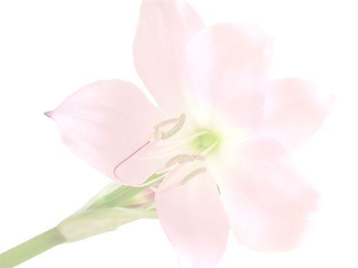 Curso Online de Introdução à Aromaterapia