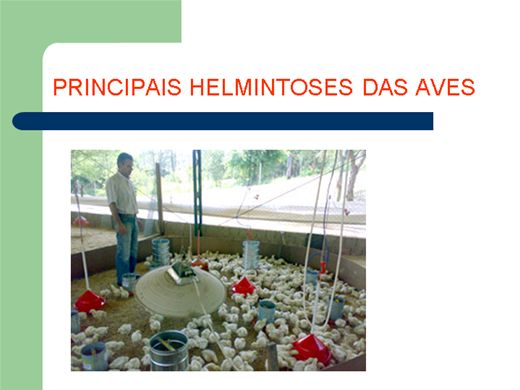Curso Online de PRINCIPAIS HELMINTOSES DAS AVES
