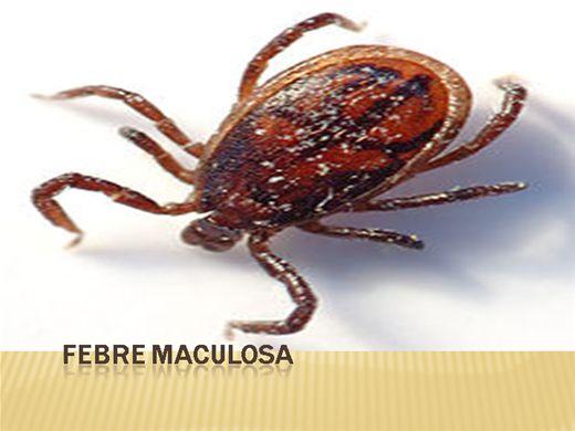 Curso Online de Febre Maculosa