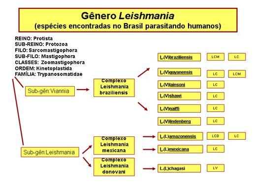 Curso Online de Leishimaniose Introdução - Parasitologia