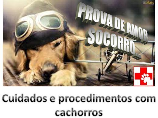 Curso Online de Cuidados e Procedimentos com Cachorros