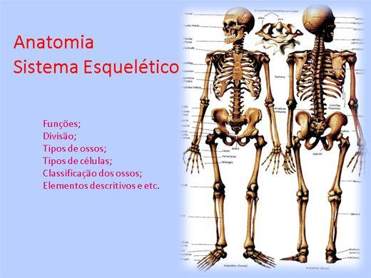 Curso Online de Anatomia: Sistema esquelético.