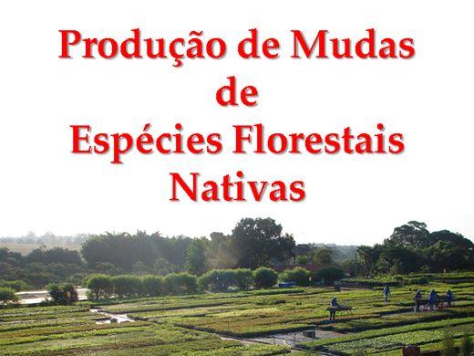 Curso Online de Produção de Mudas de Espécies Florestais Nativas