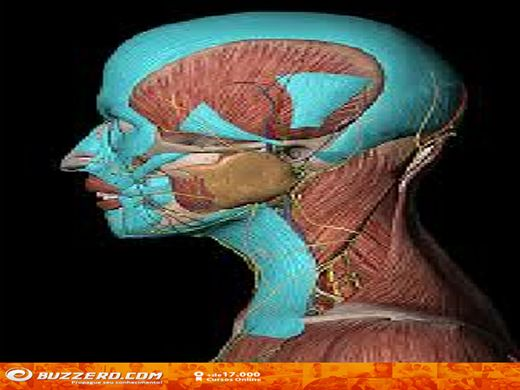 Curso Online de Anatomia Dental