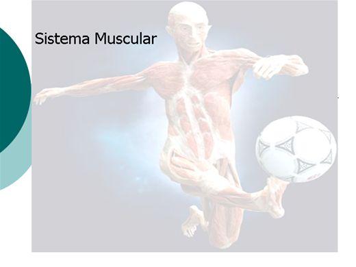 Curso Online de Anatomia do músculo