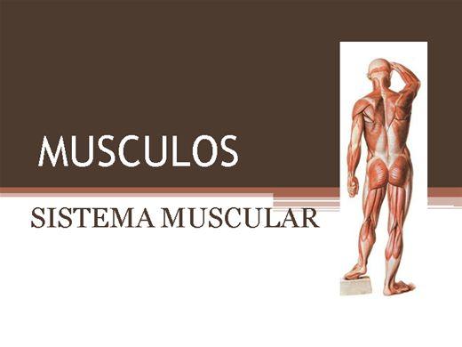 Curso Online de ESTUDO DO SISTEMA MUSCULAR