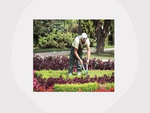 Curso Online de Jardineiro.