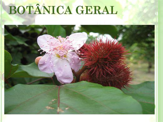 Curso Online de Botânica Geral - 20 horas