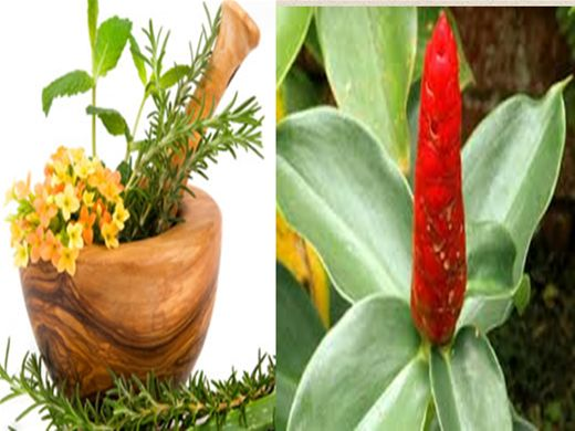 Curso Online de FITOTERAPIA -PLANTAS MEDICINAIS PARA A SAÚDE