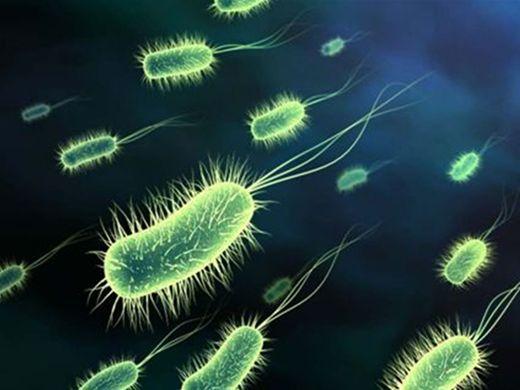 Curso Online de MICROBIOLOGIA