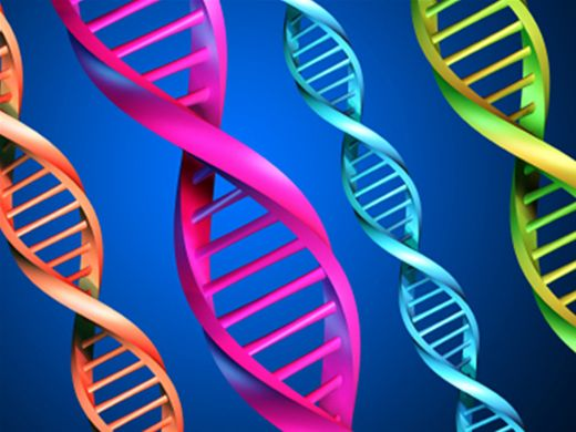 Curso Online de genética e  hereditariedade