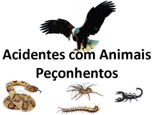Curso Online de Cuidados com Animais Peçonhentos
