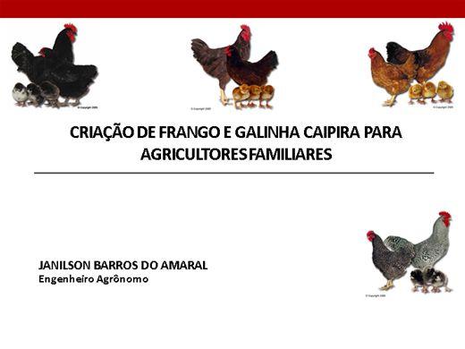 Curso Online de CRIAÇÃO DE FRANGO E GALINHA CAIPIRA PARA AGRICULTORES FAMILIARES