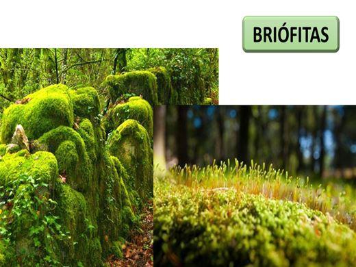 Curso Online de Briótitas Completo - Ciclo de Vida e Reprodução