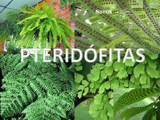 Curso Online de Pteridófitas Completo - Ciclo de Vida e Reprodução