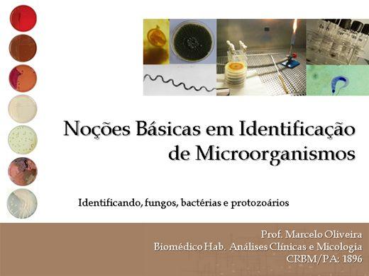 Curso Online de Identificação Básica de Microorganismos