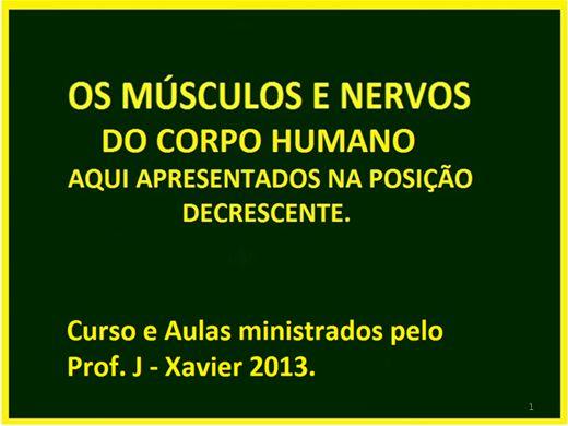 Curso Online de ANATOMIA DO CORPO HUMANO NA POSIÇÃO DECRESCENTE.