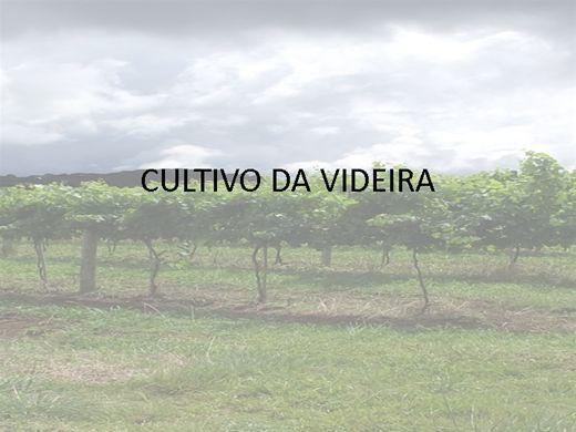 Curso Online de CULTIVO DA VIDEIRA