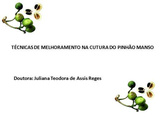 Curso Online de TÉCNICAS DE MELHORAMENTO NA CUTURA DO PINHÃO MANSO