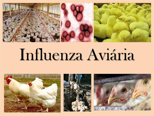 Curso Online de Influenza Aviária