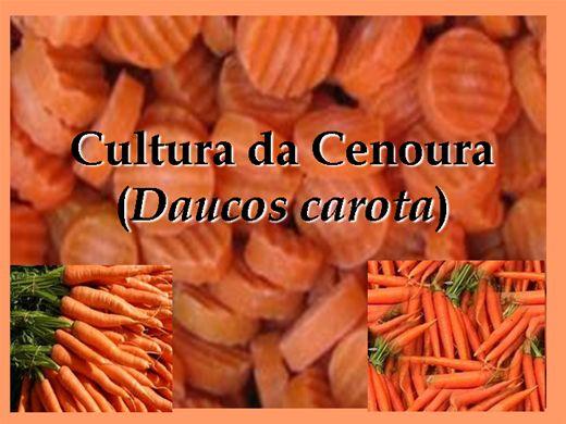 Curso Online de Cultura da Cenoura