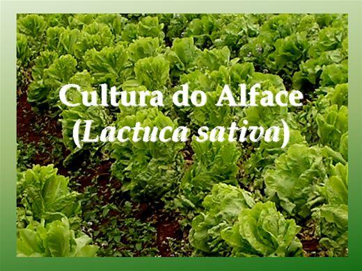Curso Online de Cultivo do Alface