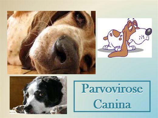 Curso Online de Parvovirose Canina