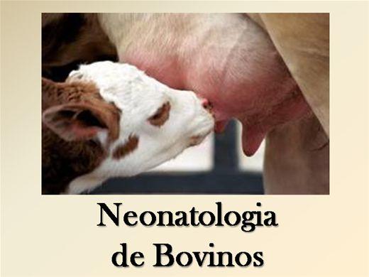 Curso Online de Neonatologia de Bovinos