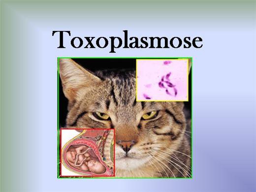 Curso Online de Toxoplasmose