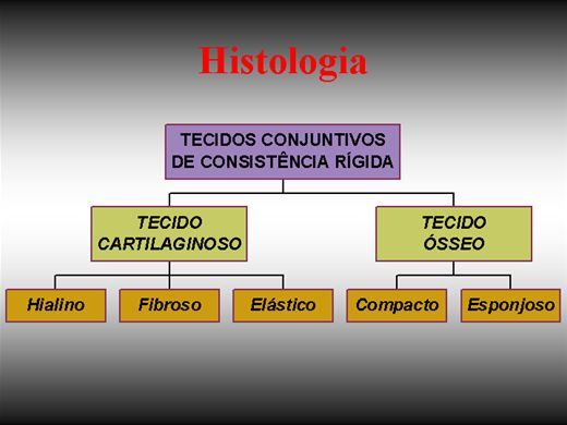 Curso Online de Histologia dos Tecidos Conjuntivos: Cartilaginoso e Ósseo