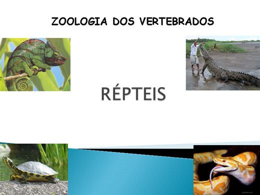 Curso De Zoologia Dos Vertebrados Repteis Buzzero Com