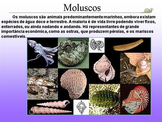 Curso Online de Moluscos