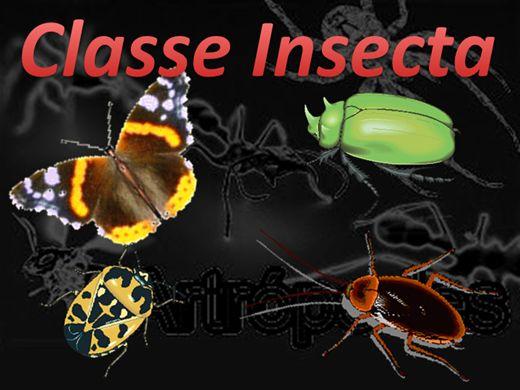 Curso Online de Artrópodo - Classe Insecta