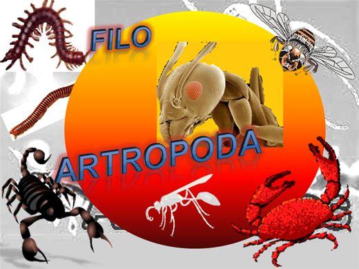 Curso Online de Artrópodes 2