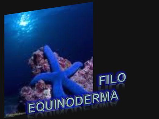 Curso Online de Equinodermos