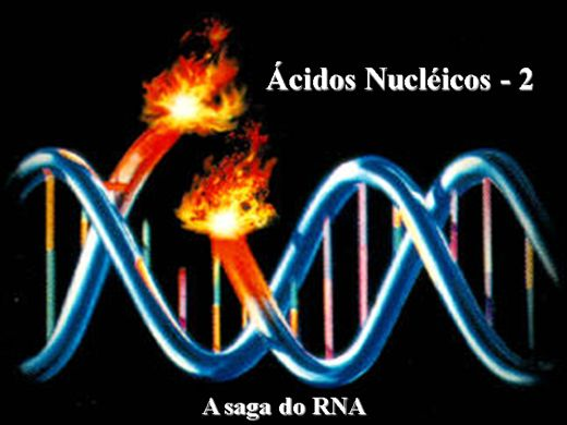Curso Online de RNA