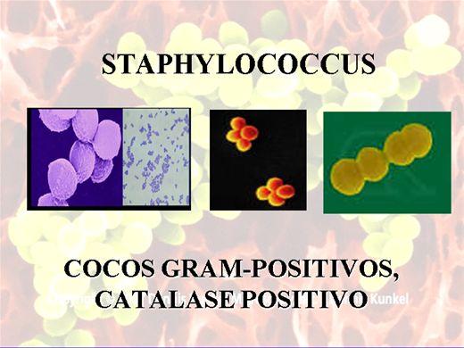 Curso Online de ESTAFILOCOCOS