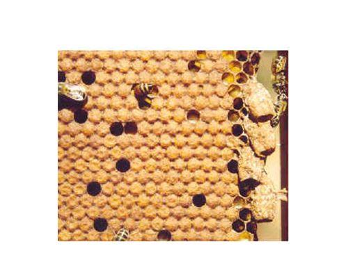 Curso Online de O trabalho com abelhas e a comercialização do mel.