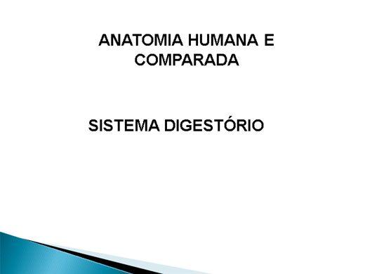 Curso Online de Sistema Digestório