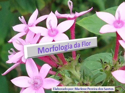 Curso Online de Morfologia da flor