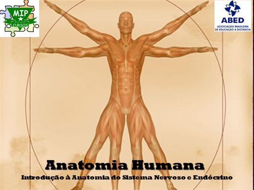 Curso Online de Anatomia Humana - Sistema Nervoso e Endócrino