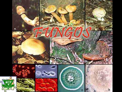 Diagnóstica de um fungo de pele de pé