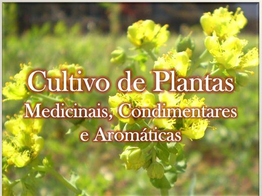 Curso Online de Cultivo de Plantas Medicinais