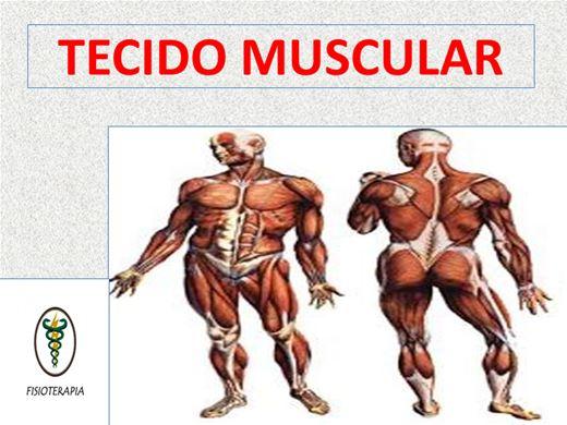 Curso Online de TECIDO MUSCULAR