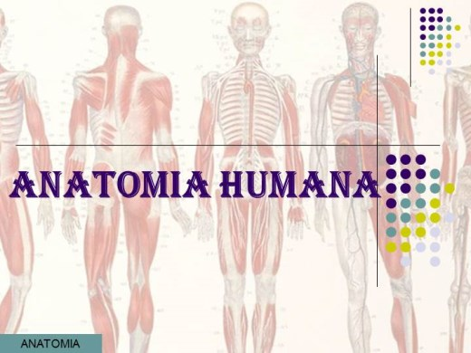 Curso Online de ANATOMIA HUMANA