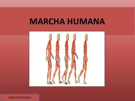 Curso Online de MARCHA HUMANA